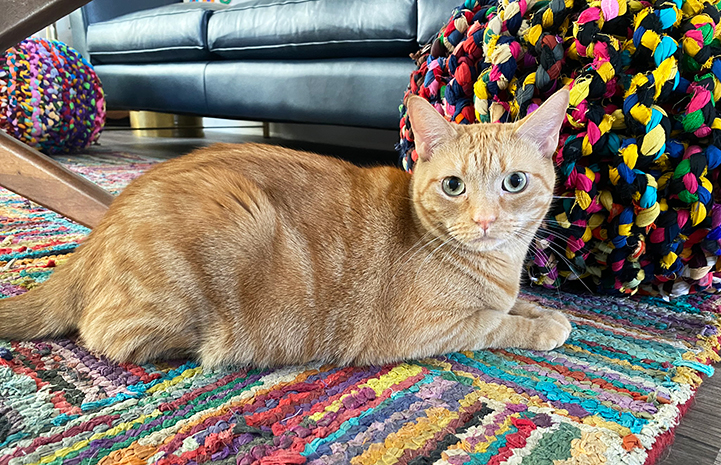 May the orange tabby cat lying on a mu.ti-colored rug in front of a couch