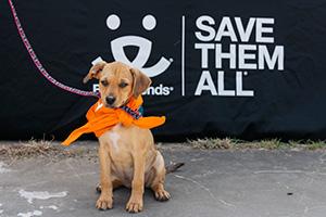 Puppy at the Houston Super Adoption event