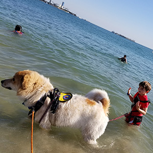 Young boy with a dog on a leash in the water