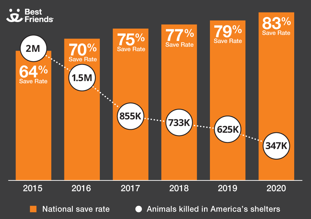 animal save rate by year