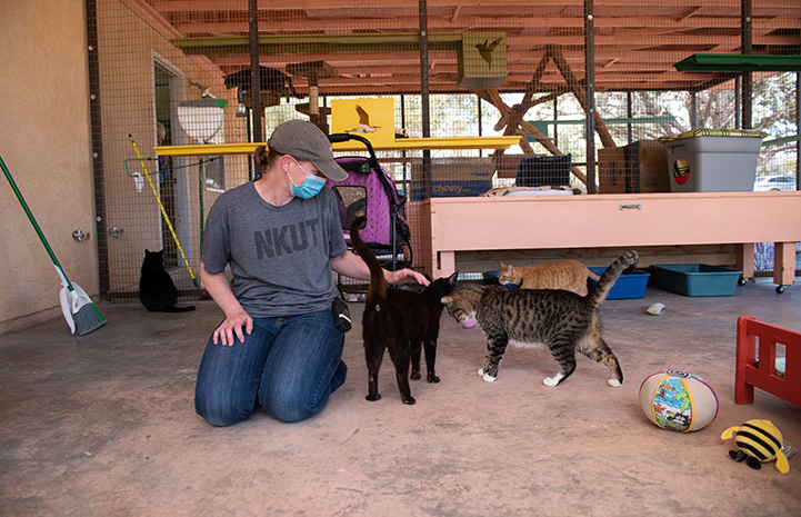 Pan and another cat interacting with a caregiver wearing a face mask