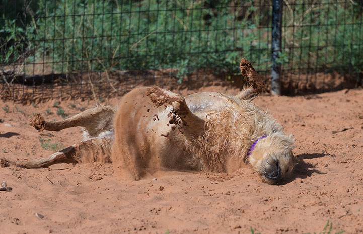Nothing feels better than a good roll in the sand after a play session