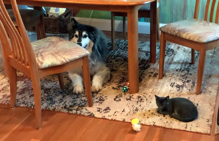 Gary the dog and Roger the kitten lying under a table