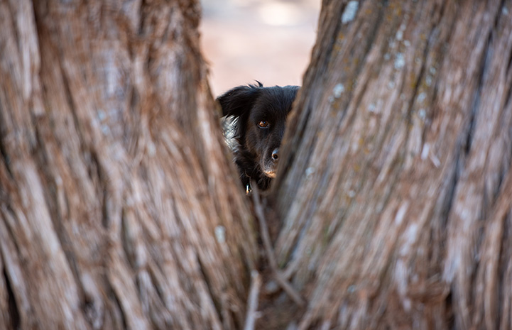 Lindy the shy dog hiding behind some trees