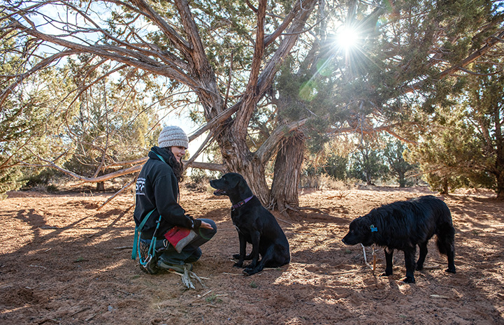 Woman sitting under a tree next to Kenya and Lindy the dogs, while the sun shines through the branches