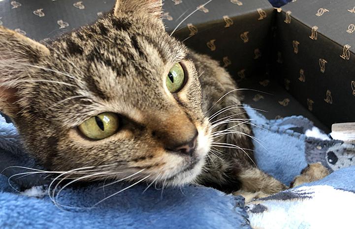 Akiri the cat lying on a blanket in a box