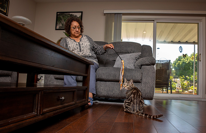 Agnes Chaney sitting on a loveseat playing with a wand toy with Akiri the cat