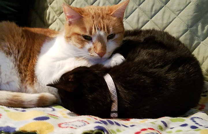 Pyro and Raoul the cats napping together