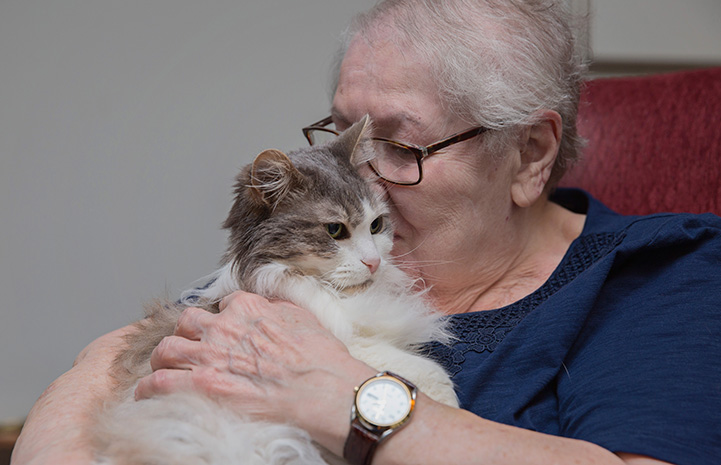 Sweet Pea, the medium hair gray and white cat, getting kissed by Marjory the woman who adopted her