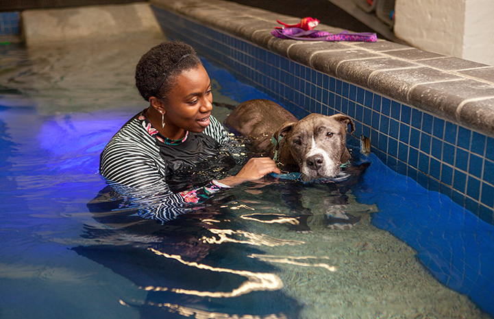 Sheena the dog in the water with a woman receiving hydrotherapy