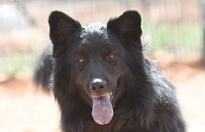 The face of Donner the dog at Best Friends Animal Sanctuary