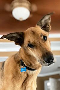 A face shot of Kangaroo the dog