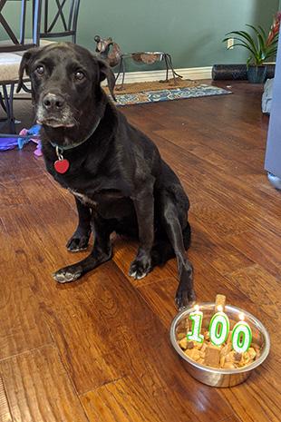 Kenya the dog with her 100th birthday cake