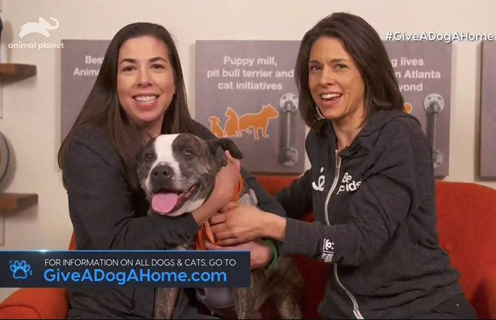 "Screen shot of Princess Potato the dog appearing on Animal Planet's ""Give A Dog A Home: Live!"" television show"