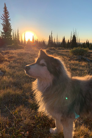Gary the dog backlit with a sunset behind him