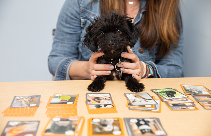 Squeak the dog being held in front of a solitaire card game