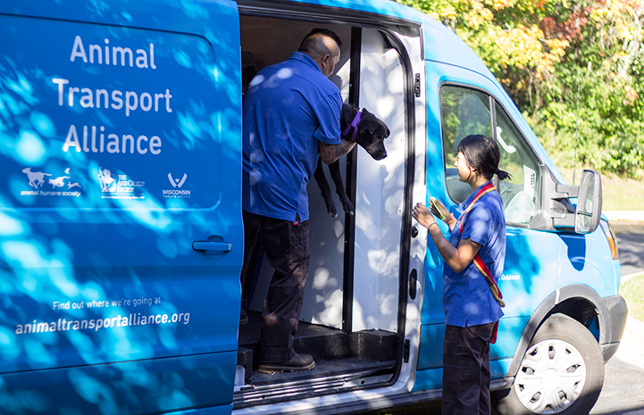 Pair of people loading a dog into a blue Animal Transport Alliance transport van