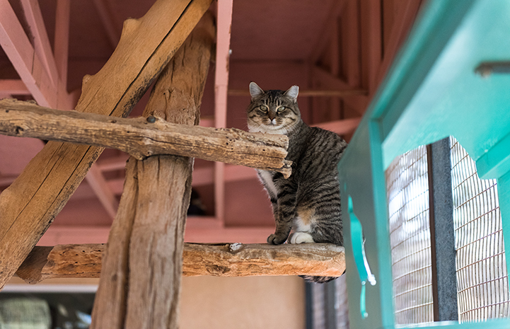 Because the Blossom and Blair were found in a national park, releasing them was not an option, so they came to Cat World