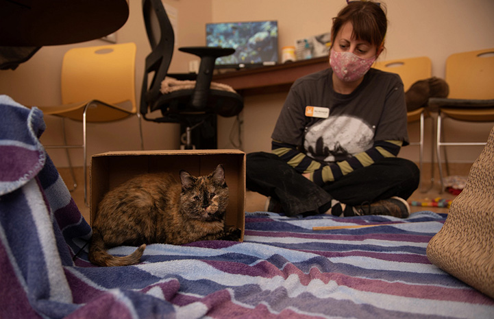 Everest the tortoiseshell cat lying in a cardboard box with a woman sitting behind her