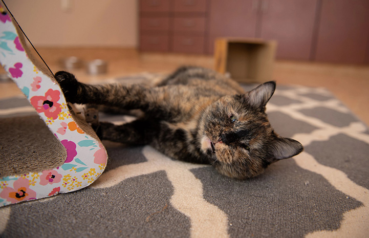Everest the tortoiseshell cat lying on her side on some carpet, next to a triangle-shaped scratcher
