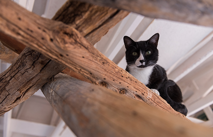 Luigi started in the rafters, but curiosity got him to start coming down to explore