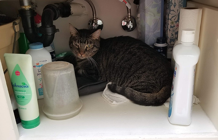 Fenny the cat hiding under a sink