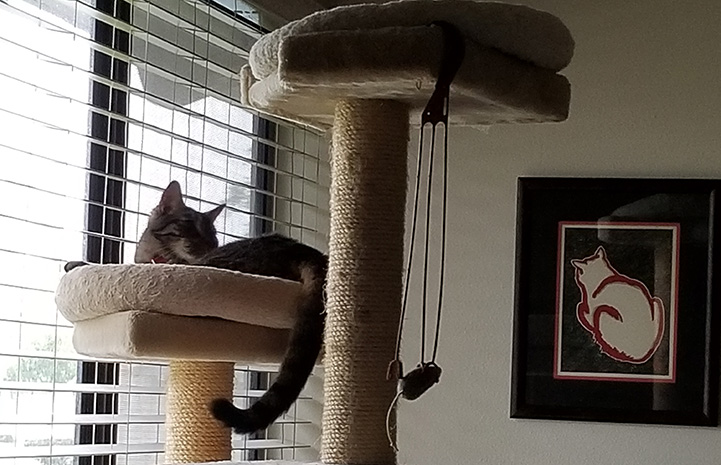 Fenny the cat lying in a cat tree next to a picture of a cat hanging on the wall