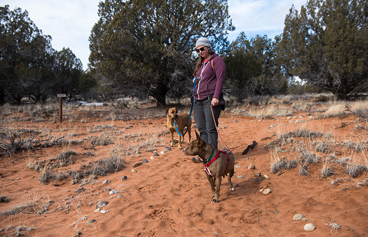 Jess the Dogtown caregiver walking Cosette and Cleveland the dogs
