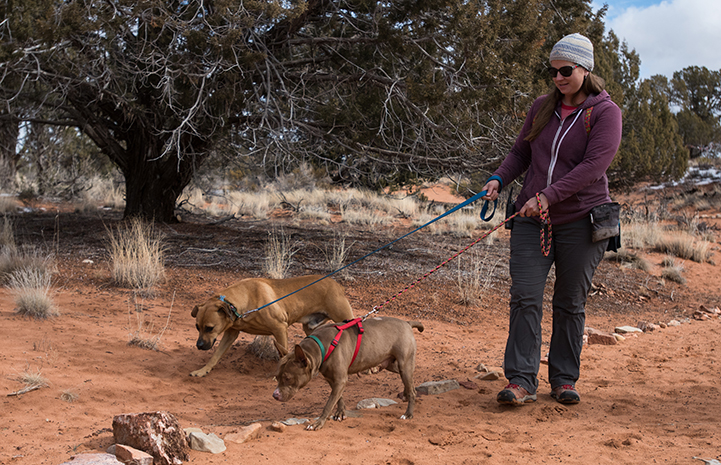 Caregiver Jess walking Cosette and Cleveland the dogs together