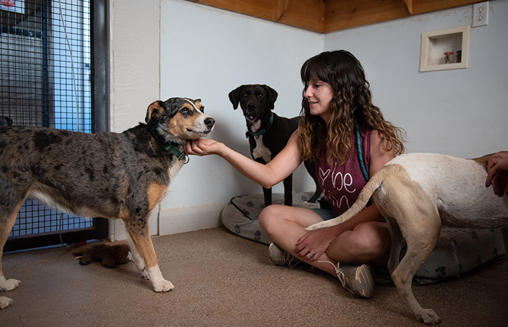 Woman petting Marble the dog's chin, while in a room with two other dogs