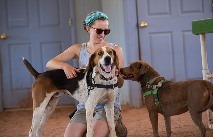 Fenway and Stax the dogs with a woman