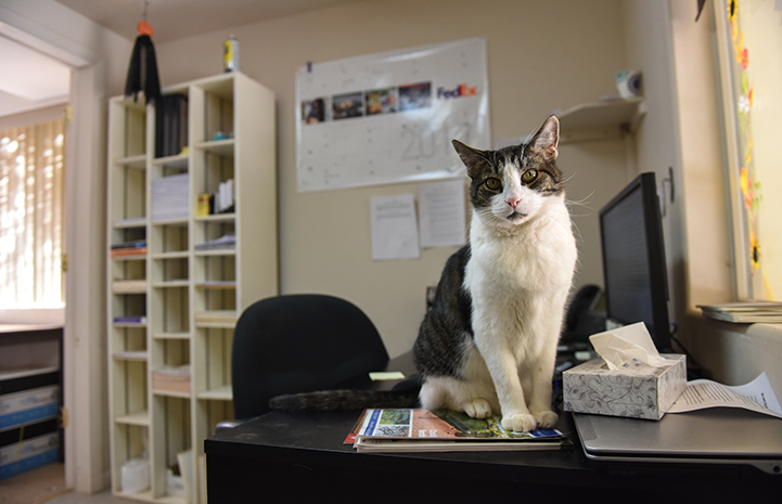 Abner, who loves being an 'only cat,' ensures that all shipping and receiving operations are running smoothly