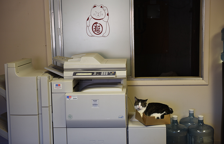 Abner the 'single cat' doesn't care for the company of other cats, so the mailroom is a great place for him to stay