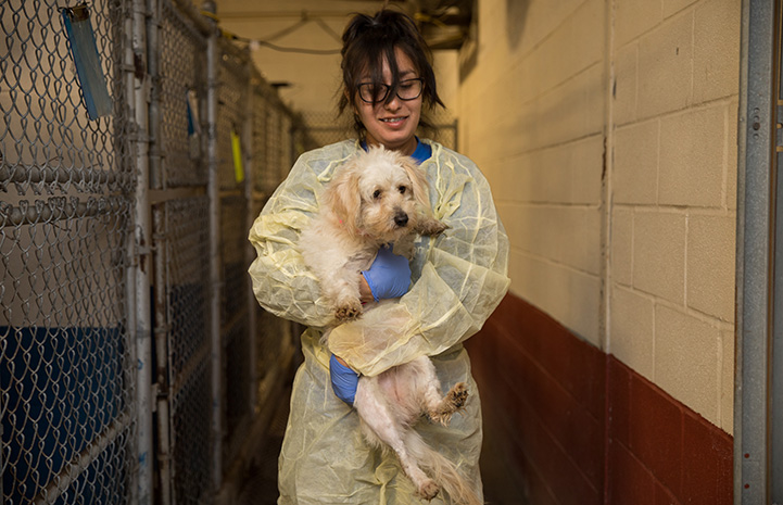 Yessy Banda in protective gown and gloves holding a puppy at Palm Valley Animal Center (PVAC)