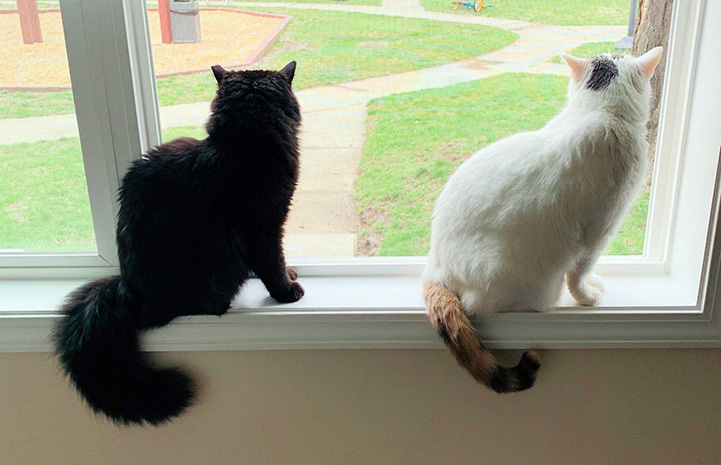 Precious and Bella the cats looking out a large window