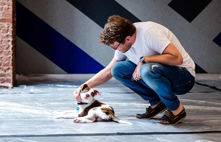 Man crouching down to pet a brown and white puppy on the floor