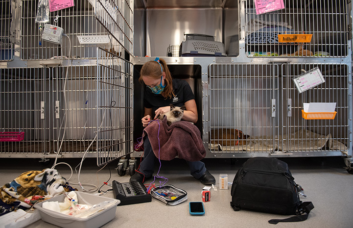Dr. Chrissy sitting in a kennel with Waffle Love the kitten on a towel on her lap administering stimulation treatment