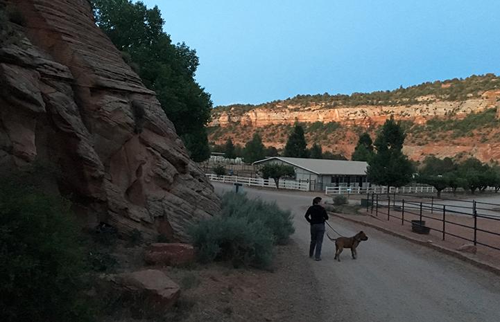 Ludo the dog enjoying a walk at dusk with Krista