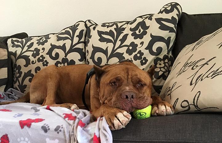 Ludo the dog enjoying himself on a sleepover