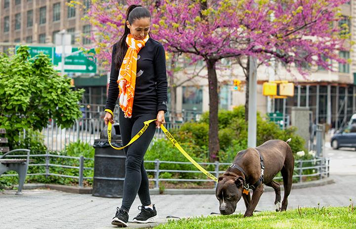 Volunteer Hiromi Nobata wearing an orange and white scarf walking a dog on a yellow Adopt Me leash