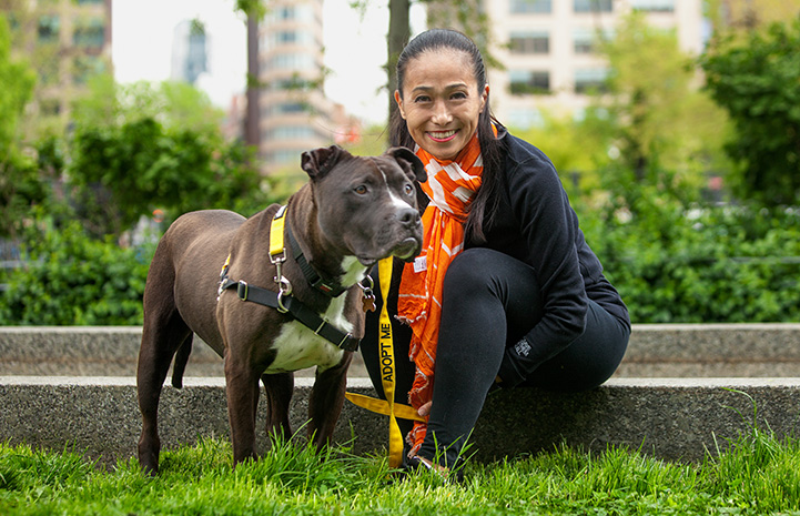 Volunteer Hiromi Nobata sitting next to a brown and white pit bull terrier type dog while out on a walk
