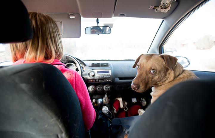 Caregivers discovered that one of Itchy the dog's favorite things in the world is car rides