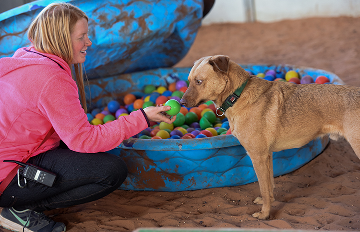 Itchy the dog loves playing in the ball pit at Tara's Run in Dogtown