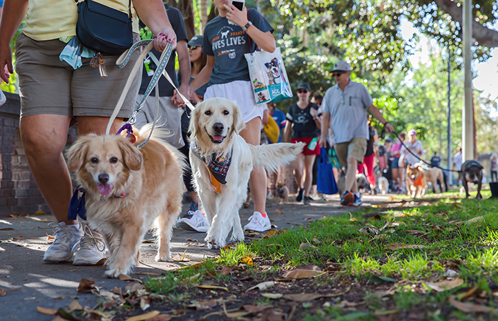 Dog and people walking during the 2017 Los Angeles Strut Your Mutt dog walk and festival
