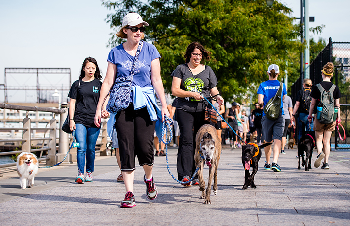 Strut Your Mutt in New York City