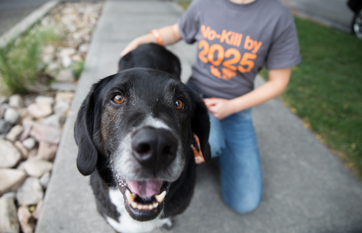 Black Labrador with graying muzzle in front of a person wearing a No-Kill by 2025 T-shirt