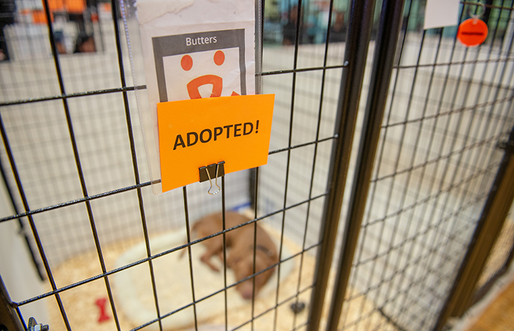 An Adopted! sign on the front of a dog kennel at the New York Super Adoption