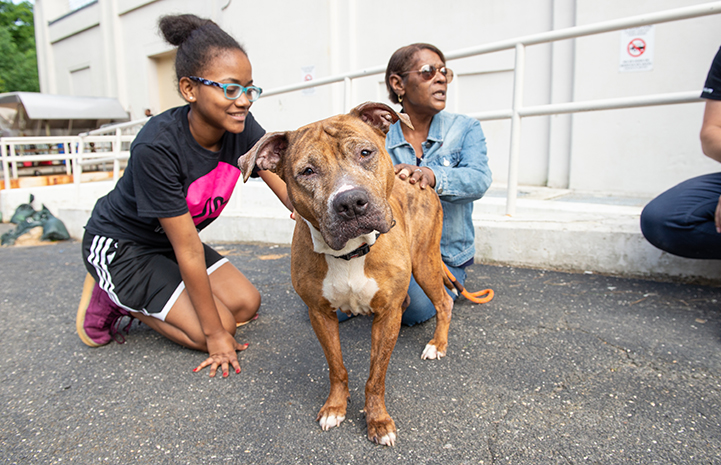 Woman and girl on the ground petting a brown and white pit bull terrier who is looking at the camera