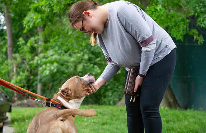 Smiling woman leaning over and holding a brown and white pit bull's head with her hand