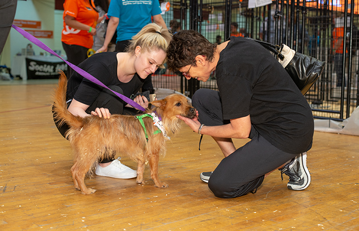 Pair of people kneeling down to pet a brown fluffy dog at the New York Super Adoption